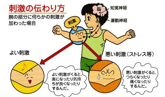 図:刺激の伝わり方